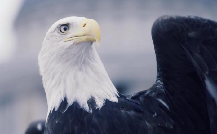Ubisoft запустил в небо Лондона орла