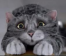Ролик дня: кошачья сказка к Рождеству