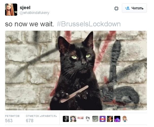 Граждане Бельгии решили запутать террористов котами в социальных сетях