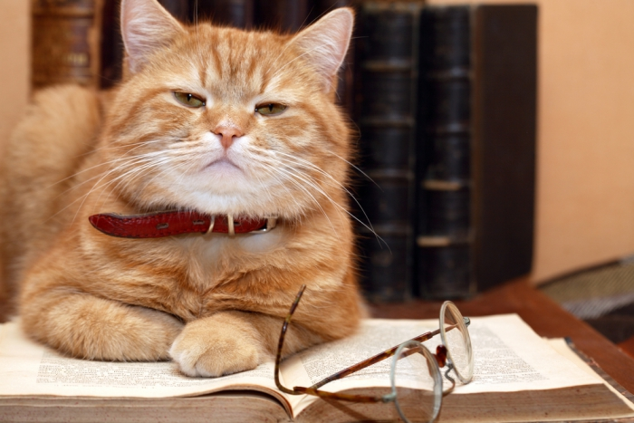 Ешкин кот одноклассники