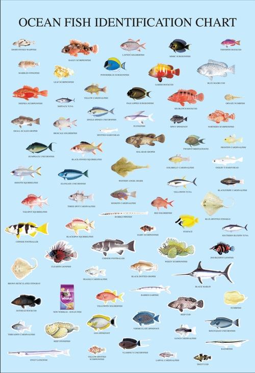 паразиты от рыбы