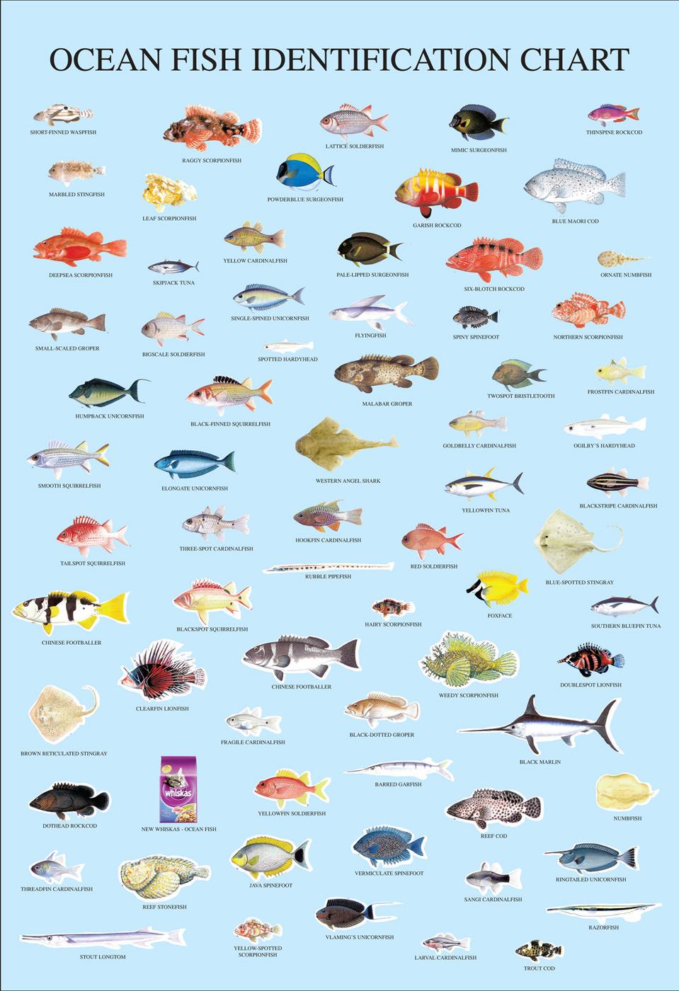 виды рыб с названиями и картинками этому обсуждаемость, просмотры
