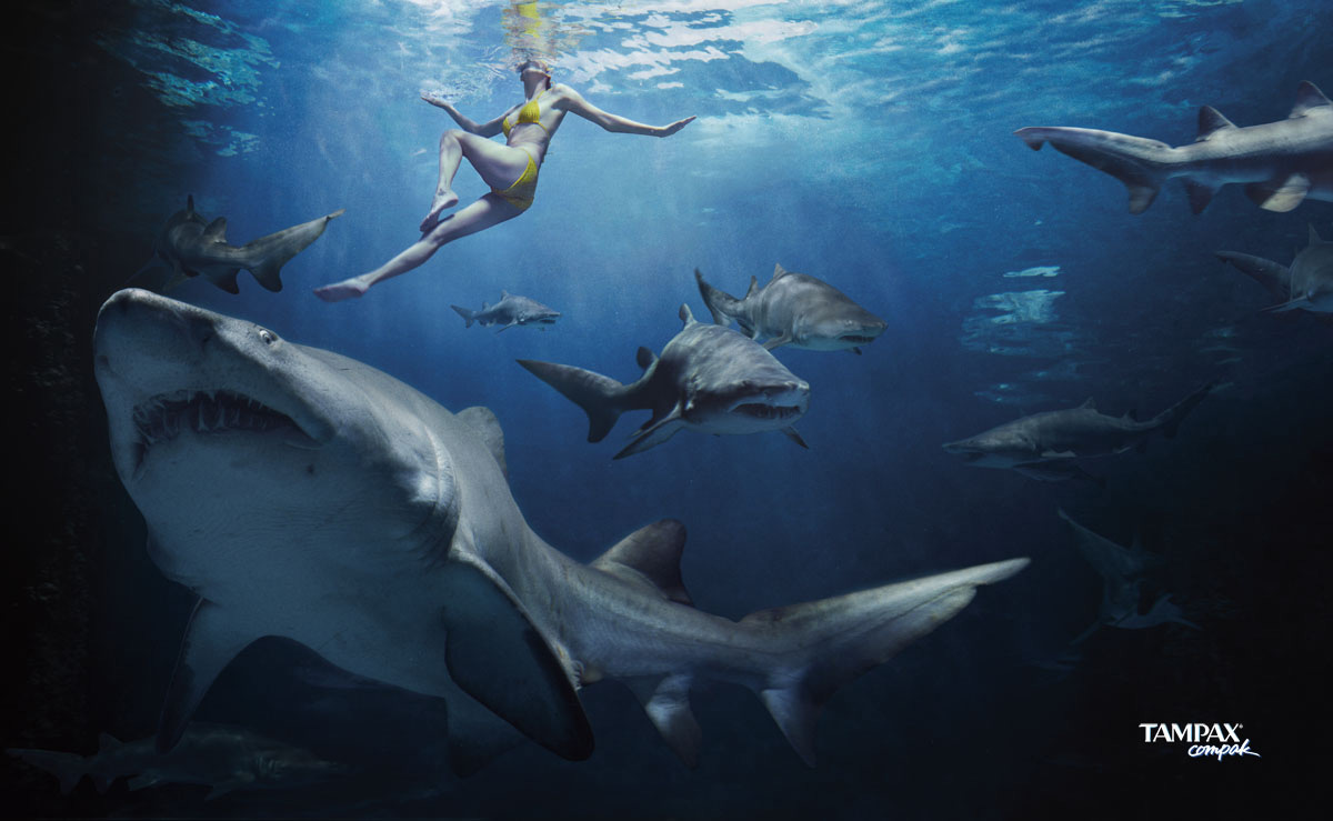 How Great White Sharks Work  HowStuffWorks
