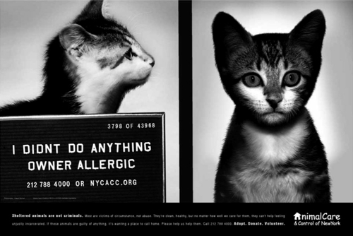 Animal Care and Control of New York City хочет помочь несчастным собакам и кошкам