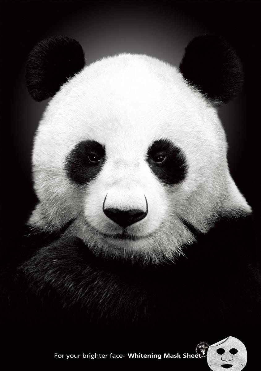 Теги медведь панда panda панда