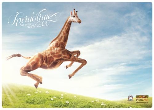Новая реклама австралийского зоопарка Perth Zoo