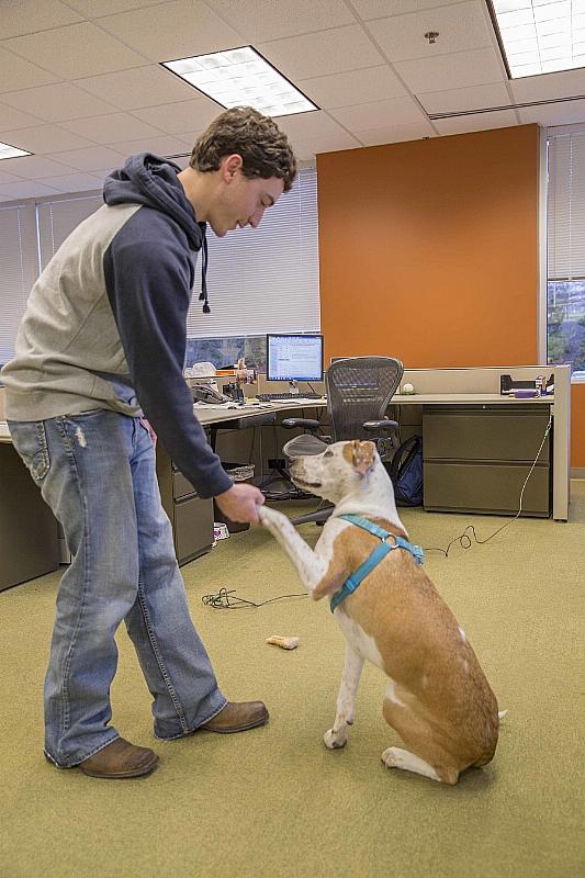 В России открыли офисы для работников с собаками